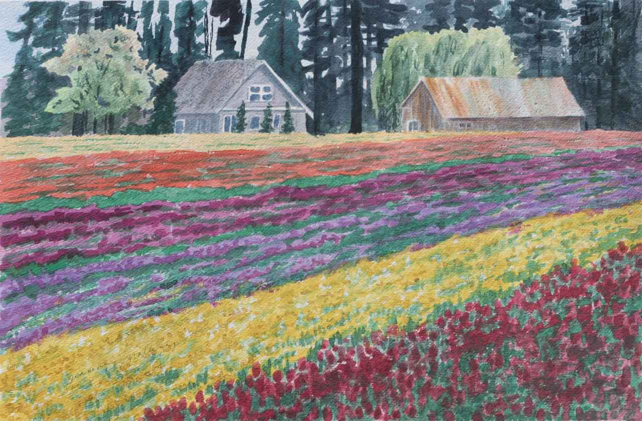 Tulip Fields Unframed Original Watercolor Painting one of the many Tulip Fields in Keizer OR with a old house and b